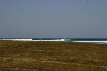 surfguide